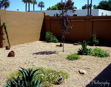 Xeriscape by Norma H.