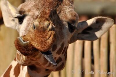 Zany Zoo Denizen by Laurie H.