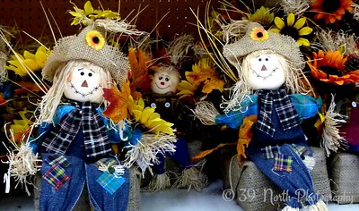 Relaxing scarecrows by Norma H.