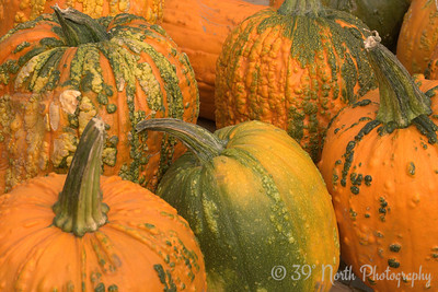 Wacky Pumpkins by Laurie H.