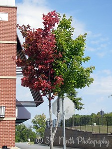 Bipolar Tree - Half Summer, Half Fall by Dave T.