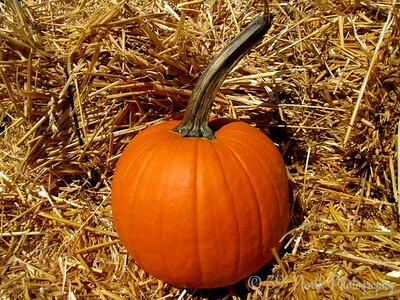 Hay, It's a Pumpkin by Dave T.