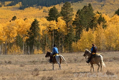 Fall Trail Ride by Laurie H.