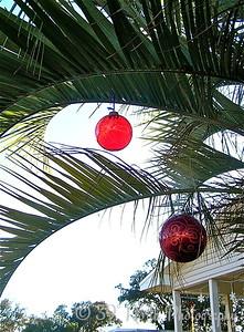 Christmas Palm by Mikki K.
