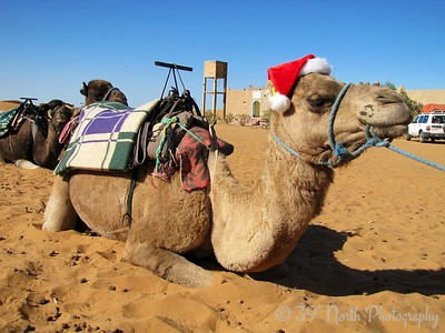 Moroccan Christmas Reincamel by Dave T.
