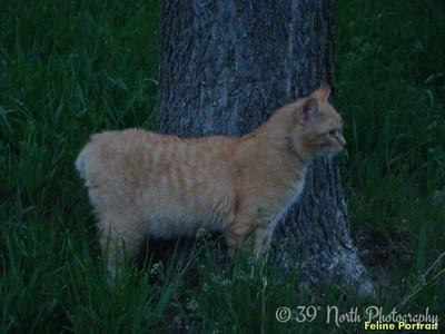 Feline Portrait by Sandi P.