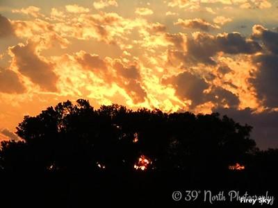 Firey Sky by Sandi P.