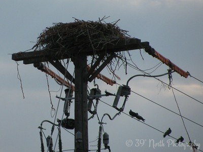 Empty Eagle's Nest by Nancy M.