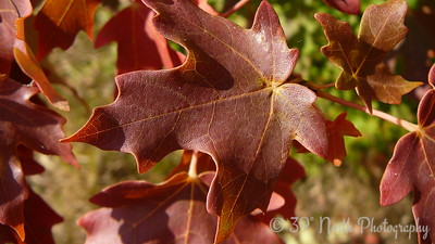 Leaves of Fall 1 by Betsy B.