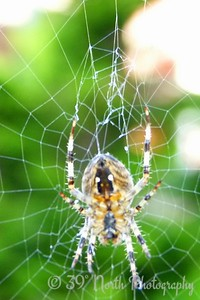 Scary spider by Norma H.