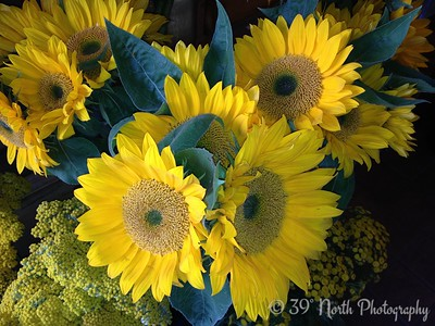 Sunflowers by Pam G.