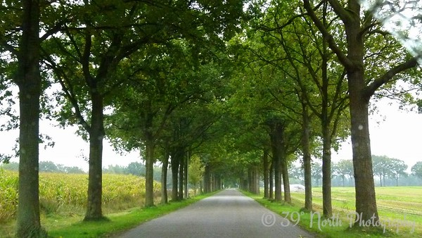 Tree-lined road by Norma H.