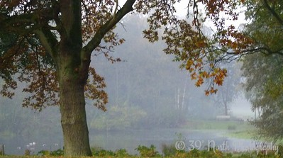 Tree in the fog by Norma H.
