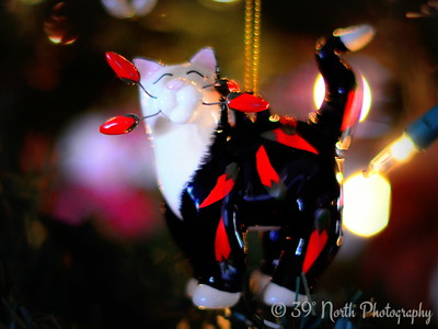 Kitty Ornament by Laurie H.