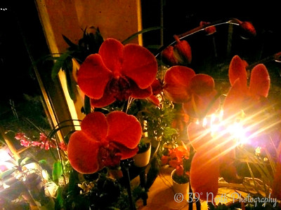 Orchids Light by Verena T.