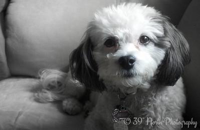 My precious granddog, Bella by Norma H.