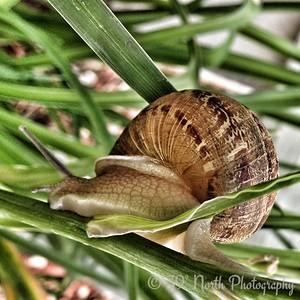 Snail by Pam G.