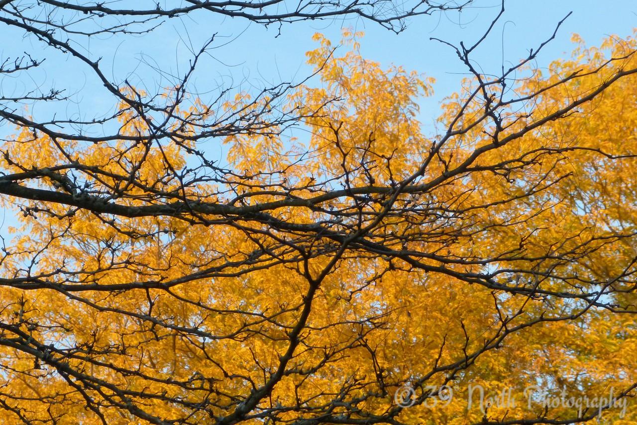 Autumn by Beth B.