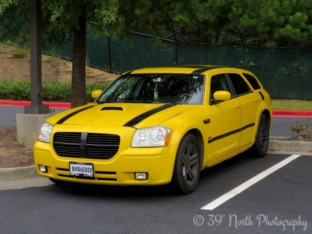 BumbleBee Yellow by Dave T.