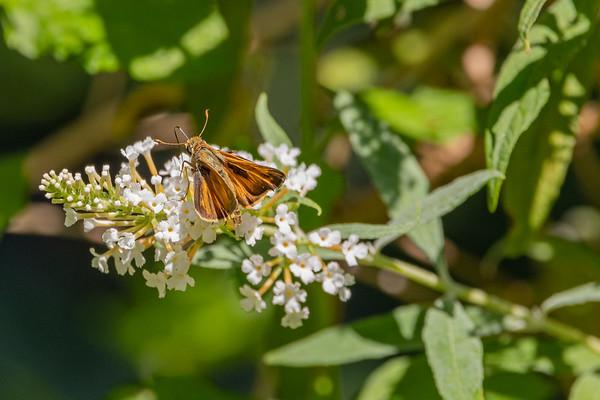 2021-Week 36 - Butterfly Having Lunch