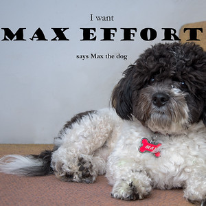 2018-Week 10 - Max the Dog