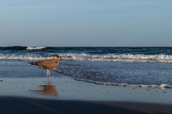 2020-Week 17 - Not Quite Beach Weather