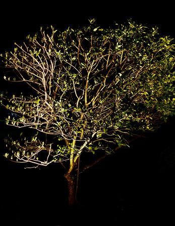 2020-Week 34 - Triptych of Hibiscus Tree