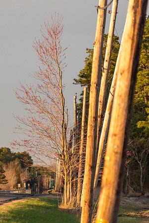 2020-Week 16 - Tree and Poles