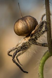 2018-Week 17 - Plant Spider