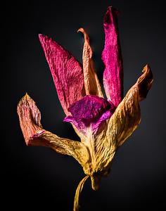 2018-Week 16 - Dried Hibiscus Flower