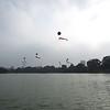 Balloons floating over Hoan Kiem lake in the center of old Hanoi.