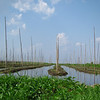 The gardens are built on beds of water hyacinth