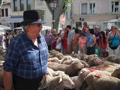 Fête de la transhumance à Saint-Rémy-de-Provence. A berger, or shepherd.