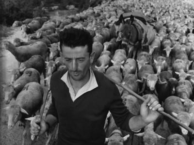 Robert Doisneau 1958, Jacques the shepherd