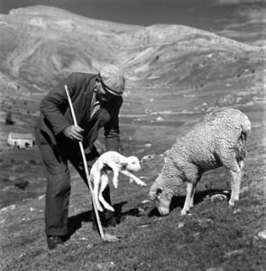 Robert Doisneau 1958 - shepherd with new-born lamb