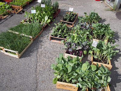 Nursery herbs and vegetables. Saturday market, Le Petit Palais