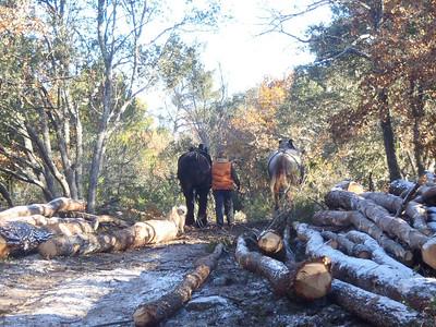 Arboriste (Forester)