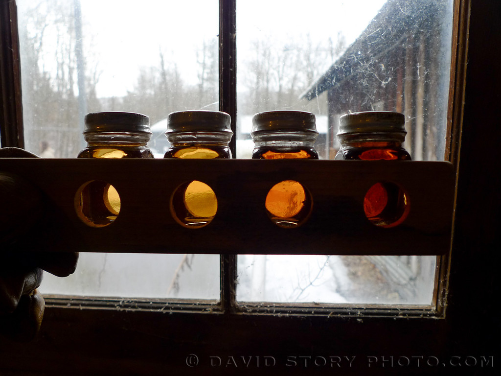 Maple syrup grades at Cornell University's Arnot Teaching and Research Forest.