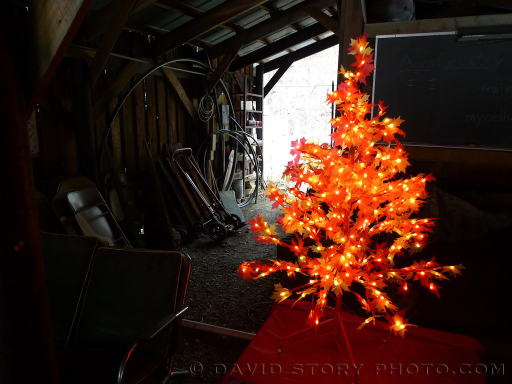 A maple light display illuminates a barn at Cornell University's Arnot Teaching and Research Forest.