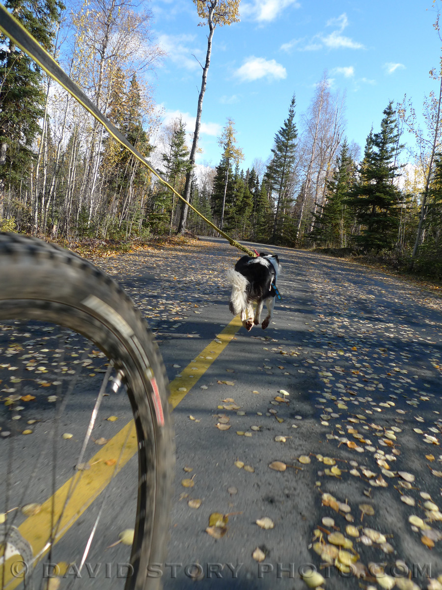 Bikejoring with Bonney.
