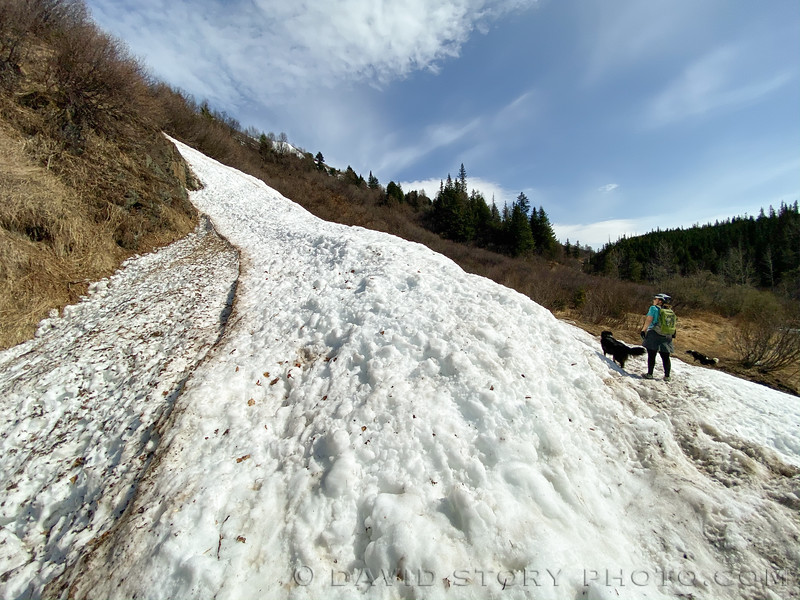 2020 05 09: Avalanche chute along Crescent Creek Trail. Cooper Landing, AK.