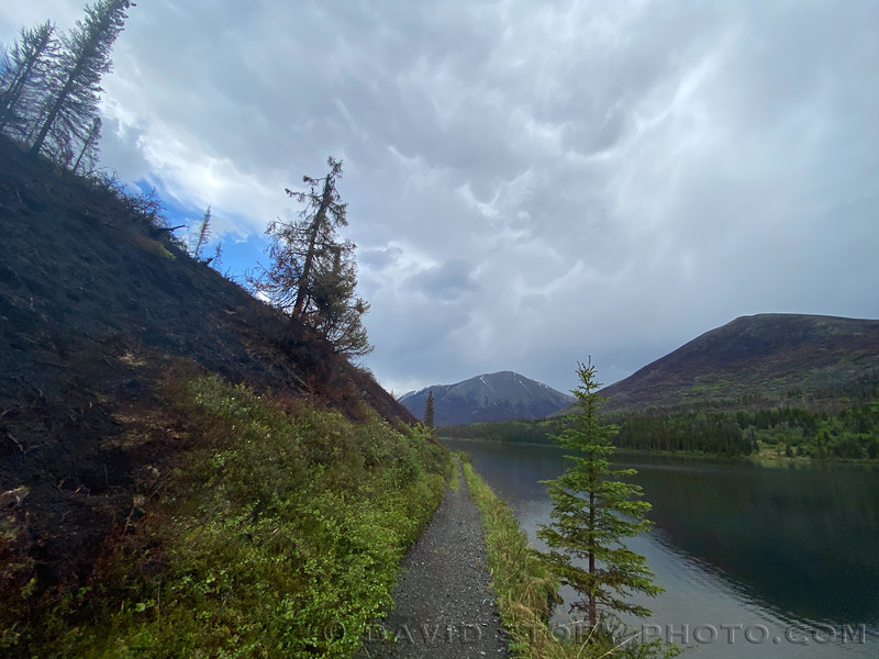 2020 06 13: Swan Lake Fire scar. Resurrection south. Chugach National Forest, Alaska.