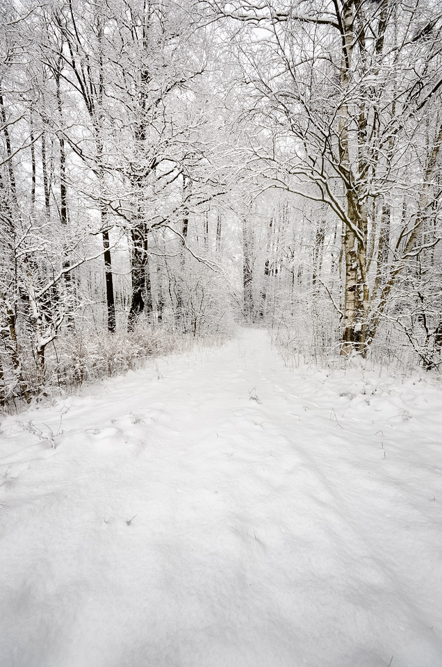 winter scene: road and forest with hoar-frost on trees
