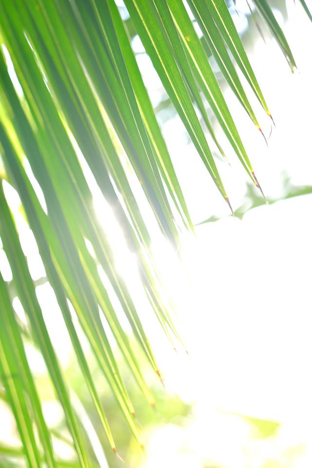 palm leaves close-up