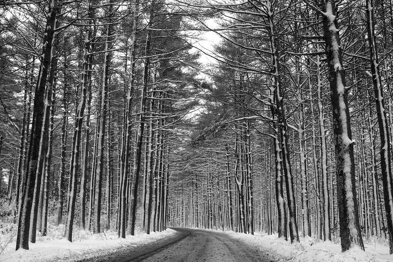 Snow Way
