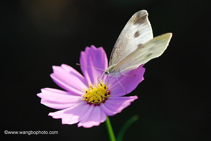 花花世界 - 一镜收江南 - 清韵