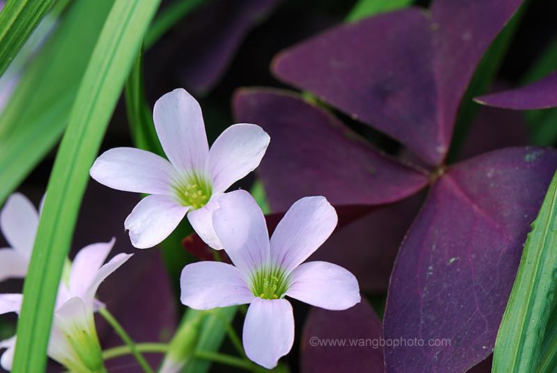 春日世纪公园的小花 - 一镜收江南 - 清韵