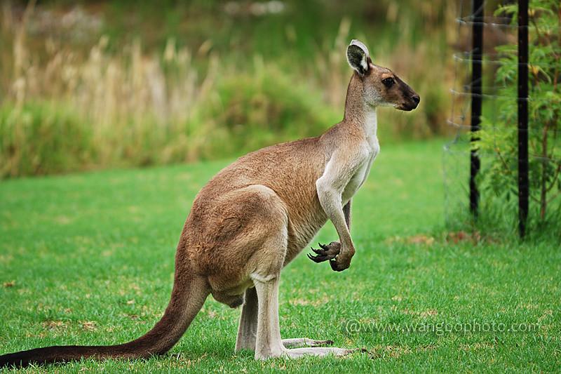 西澳自驾 -- 海阔凭鱼跃 天高任鸟飞 - Bob - 清韵