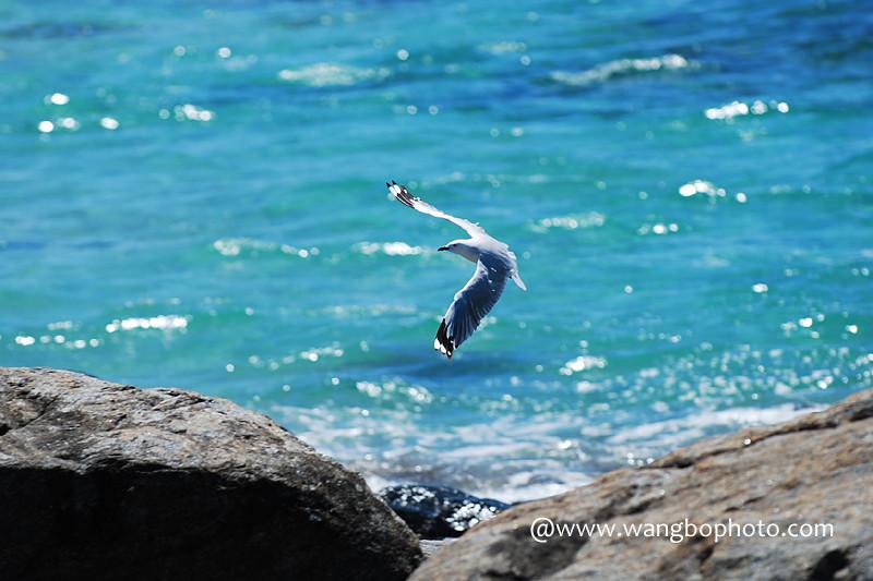 海阔凭鱼跃 天高任鸟飞 -- 西澳自驾游 - Bob - 清韵