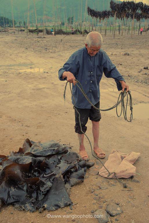 老人与海带 - 一镜收江南 - 清韵